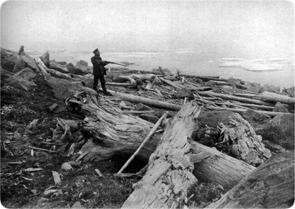 30 mammoths-fossil_forest_new_siberian_islands.jpg