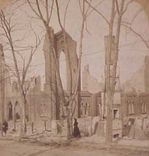 trees-and-poles_after_urban_fire_3.jpg