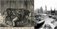 the-great-chicago-fire-of-1871--was-caused-by-a-cow.jpg